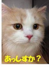 きき0109-2.jpg